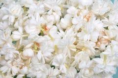 Jasmine. Flowers spread on floor stock image
