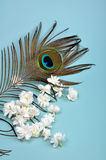Jasmine. Flowers with peacock feather eye - like a romantic soft background Stock Image