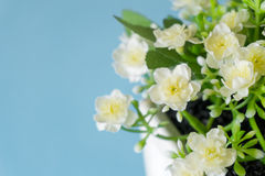 Jasmine artificial flower Royalty Free Stock Photo