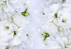 Jasmine Background Royalty Free Stock Photography