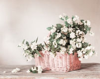Jasmine in basket on white background Royalty Free Stock Image