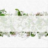 Jasmine, bird cherry, white flowers of spring, arrangement Stock Photos