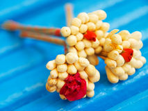 Jasmine Blossom Foto de Stock Royalty Free