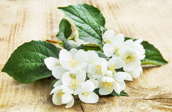 Jasmine Blossom op Houten Achtergrond stock foto's
