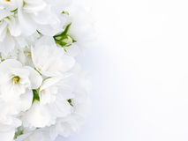 Jasmine Bouquet Stock Image
