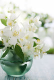 Jasmine bouquet Royalty Free Stock Images