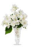 Jasmine bouquet in the vase Stock Photos