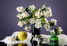 Jasmine. Bouquet in the vase on dark background stock photo