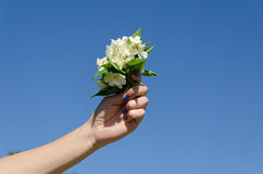 Jasmine bouquet woman hand on blue sky background Royalty Free Stock Image