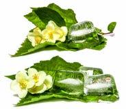 Jasmine branch  frozen ice cubes  isolated cosmetics concept Stock Image
