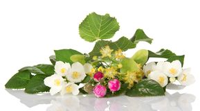 Jasmine branch, linden flowers and buds of rose Royalty Free Stock Image