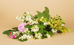 Jasmine branch, linden flowers and tea-rose Royalty Free Stock Photography