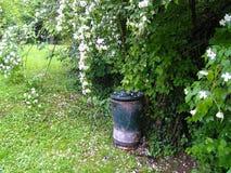 Jasmine bush in nature, with green grass and garbidge stock photos