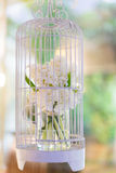 Jasmine in a cage. A white jasmine in a cage , this props suitable for many events Royalty Free Stock Images