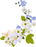 Jasmine and cherry flowers design Stock Images