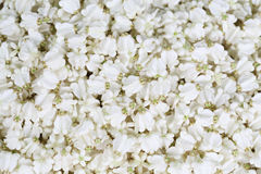 The jasmine for create thai garland at street market. Thailand Stock Image