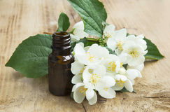 Jasmine Essence Stock Image