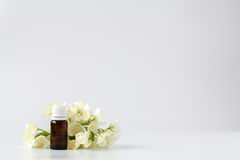 Jasmine Essence in a Bottle with Jasmine Flowers Royalty Free Stock Photography