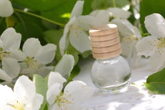 Jasmine Essential Oil Royalty Free Stock Images