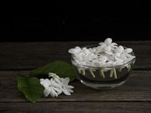 Jasmine floating in clear glass on wooden background royalty free stock images