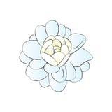 Jasmine Flower Royalty-vrije Stock Afbeeldingen