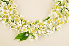 Jasmine flower bloom. Blooming jasmine flower in a beautiful garland for a spring holiday Royalty Free Stock Photo