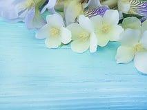 Jasmine flower on blue wooden background frame. Jasmine flower blue wooden background frame royalty free stock images