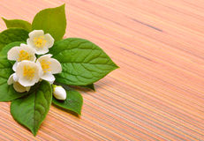 Jasmine flower bouquet on wood Royalty Free Stock Images