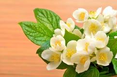 Jasmine flower bouquet on wood Stock Image