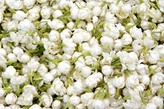 Jasmine Flower. Full of Jasmine Flower as background, with green leaves and white flowers Royalty Free Stock Photography