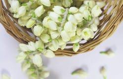 Jasmine flower garland Royalty Free Stock Image