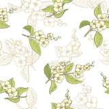 Jasmine flower graphic color seamless pattern sketch illustration Royalty Free Stock Image