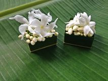 Jasmine flower and green background. Royalty Free Stock Images
