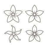 Jasmine Flower Icons Set en el fondo blanco Vector Imagenes de archivo