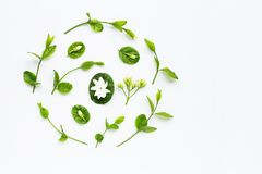Jasmine flower and leaves on white. Background. Copy space stock photo