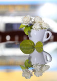 Jasmine flower (for Mother Day of Thailand) Royalty Free Stock Photography