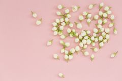 Jasmine flower on pink background. Group of white budded jasmine. Flowers pattern. Flat lay, top view. Selective focus royalty free stock image