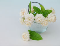 Jasmine flower in the pot at the wood table with the white wall stock image