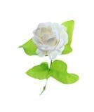Jasmine flower on white background. Royalty Free Stock Photos