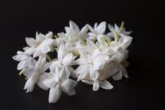 Jasmine flowers. On black background royalty free stock photo