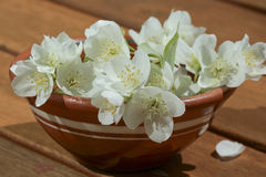 Jasmine flowers in a bowl Royalty Free Stock Photography