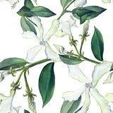 Jasmine - flowers, buds, leaves. Seamless background. Collage of flowers on a watercolor background. Use printed materials, signs,. Objects, websites, maps Stock Images