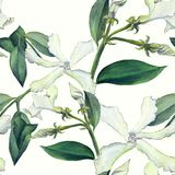 Jasmine - flowers, buds, leaves. Seamless background. Collage of flowers on a watercolor background. Use printed materials, signs,. Objects, websites, maps Stock Photos