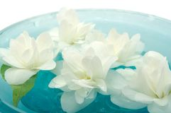 Jasmine Flowers Floating on Water Stock Photography