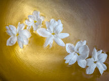 Jasmine flowers foat on golden bowl Stock Photography