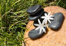 Jasmine flowers on hot black stones close up Royalty Free Stock Photo
