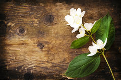 Jasmine flowers and leaves on brown wooden board. Royalty Free Stock Photos