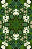 Jasmine flowers mandala Royalty Free Stock Photo