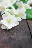 Jasmine flowers on an old wooden board Stock Photography
