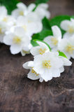 Jasmine flowers on an old wooden board Royalty Free Stock Images